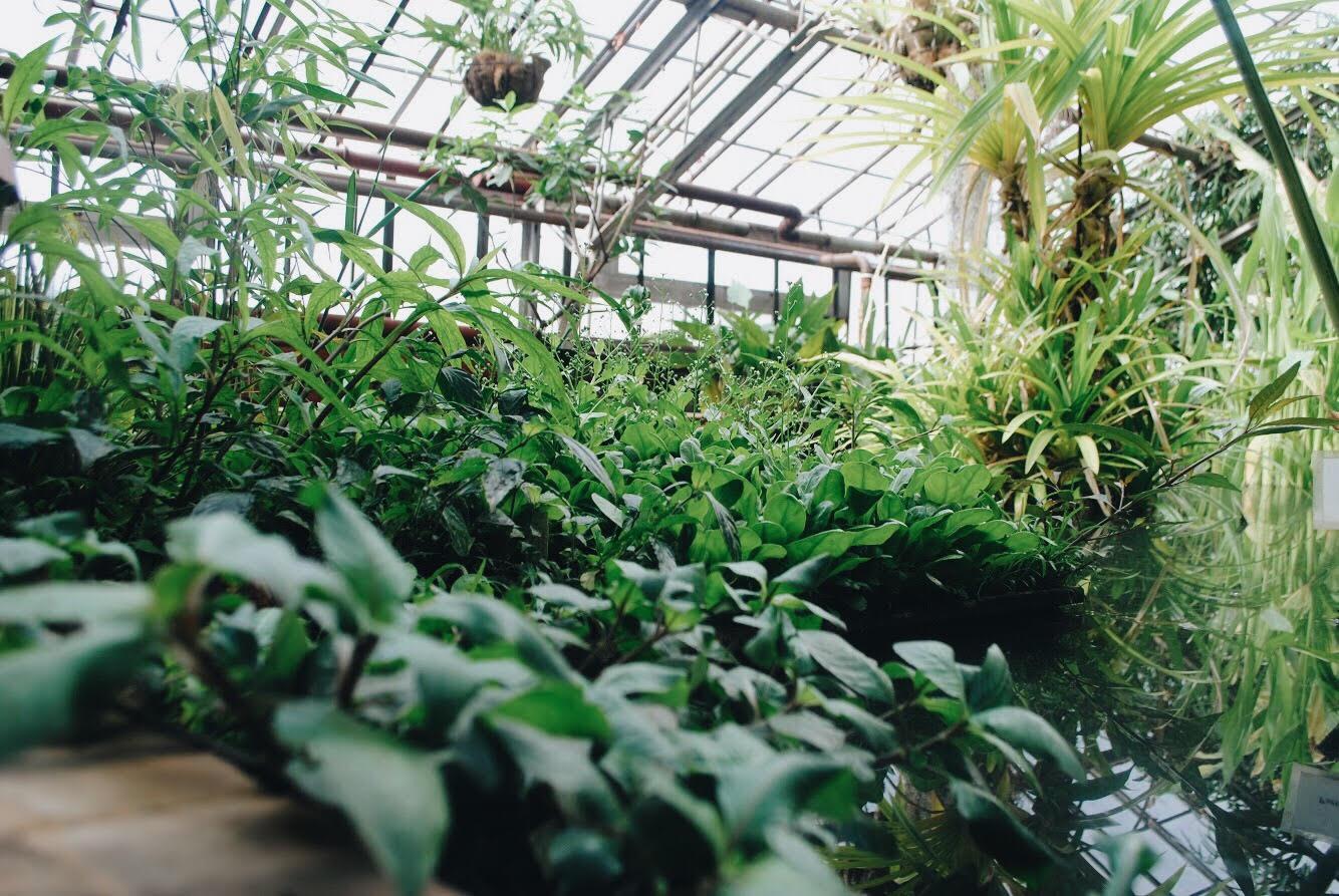 будет ботанический сад в иркутске фото сейчас магазины своему